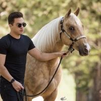 Wesley Safadão compra cavalo de mais de R$ 2 milhões